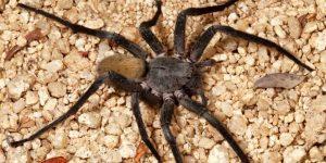 Preguntas frecuentes sobre las arañas
